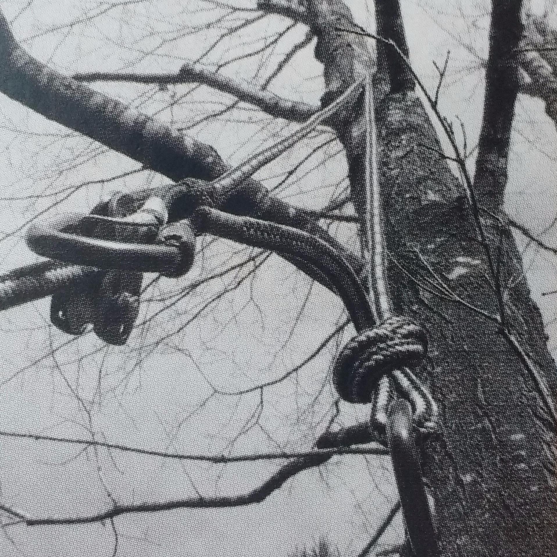 Wild Heart Tree Care
