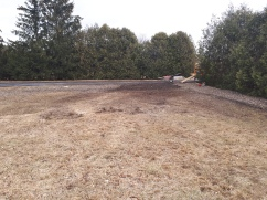Silver Maple Removal After